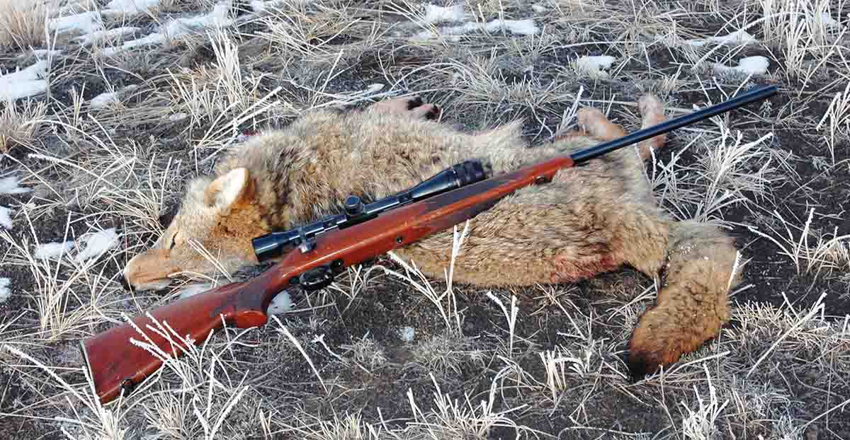 Mike's primary use for his Remington Model 700 ADL .222 Remington Magnum is shooting predators lurking about his property.